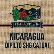 Nicaragua Dipilto SHG Catuai